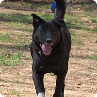 Adopt A Pet :: TOMMY - Blairsville, GA
