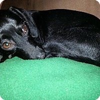 Adopt A Pet :: Lanky - Chewelah, WA