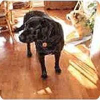 Adopt A Pet :: Bakkus - Rigaud, QC