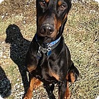 Adopt A Pet :: Lincoln--pending - New Richmond, OH