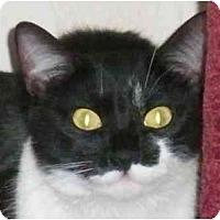Adopt A Pet :: Oreo - Summerville, SC