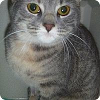Adopt A Pet :: Tiggy - Hamburg, NY
