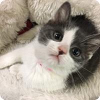 Adopt A Pet :: Aurora - Medina, OH