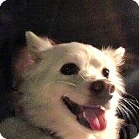 Adopt A Pet :: Princess - Alpharetta, GA