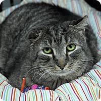 Adopt A Pet :: Apollo - Winchendon, MA