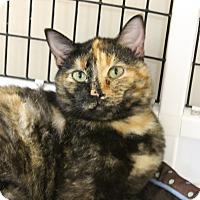 Adopt A Pet :: Gilly - Medina, OH