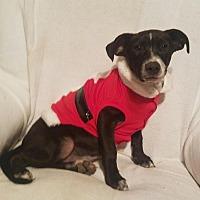 Adopt A Pet :: Bashful - Hayden, AL