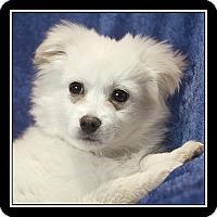 Adopt A Pet :: Aly - San Diego, CA