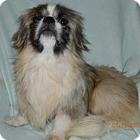 Adopt A Pet :: Pierre - Umatilla, FL