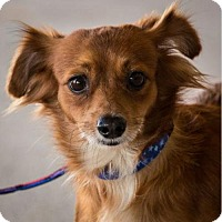 Adopt A Pet :: Lupe - Hillside, IL