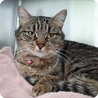 Adopt A Pet :: LILY - Methuen, MA
