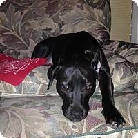 Adopt A Pet :: Grace - Pleasant Hill, CA