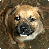 Adopt A Pet :: Billie - Atlanta, GA