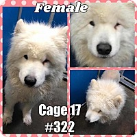 Adopt A Pet :: Cage 17 - Greenville, TX