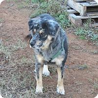Adopt A Pet :: Sara - Marble Falls, TX
