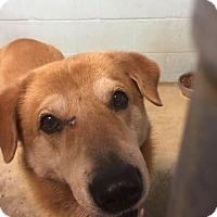 Adopt A Pet :: Wilbur - Sullivan, MO
