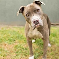 Adopt A Pet :: RUSSEL - Los Angeles, CA
