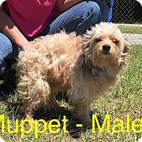 Adopt A Pet :: Muppet - Waycross, GA