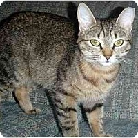 Adopt A Pet :: Teagan - Hamilton, ON