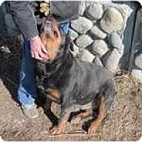 Adopt A Pet :: Raven - Surrey, BC