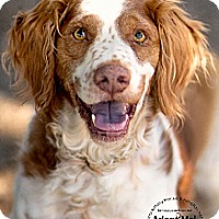 Adopt A Pet :: AZ/Calvin - Dansville, NY