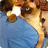 Adopt A Pet :: Sorrel - Davis, CA