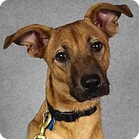 Adopt A Pet :: Miley - Minneapolis, MN