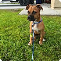Adopt A Pet :: Leela - Scottsdale, AZ