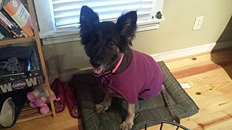 German Shepherd Dog Dog for adoption in Roswell, Georgia - Xena