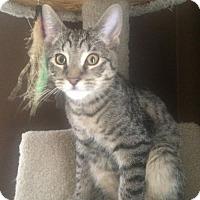 Adopt A Pet :: Roarke - Hamilton, ON