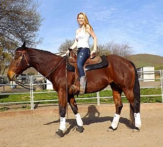 Quarterhorse for adoption in Los Gatos, California - Brie