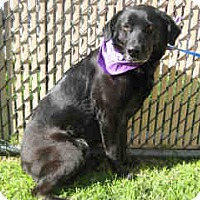 Adopt A Pet :: DAISY A038679 @ City of Norco - Beverly Hills, CA