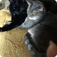 Adopt A Pet :: Gabby - Hopkinsville, KY