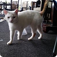 Adopt A Pet :: Wanda - New Smyrna Beach, FL