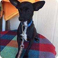 Adopt A Pet :: PEACHES - Elk Grove, CA