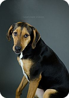 Hound (Unknown Type) Mix Dog for adoption in Muskegon, Michigan - Genevieve