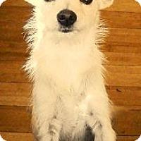 Adopt A Pet :: MISSY - Hollywood, FL