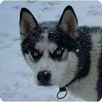 Adopt A Pet :: Phantom - Belleville, MI