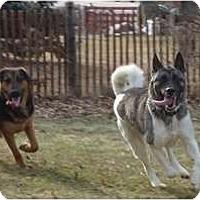 Adopt A Pet :: MercedesSOCIAL - Toronto/Etobicoke/GTA, ON
