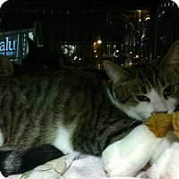 Adopt A Pet :: Jangle - Hamilton, ON
