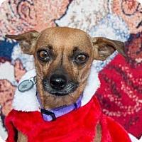 Adopt A Pet :: Sophie - San Marcos, CA