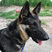 Adopt A Pet :: KHLOE - SAN ANTONIO, TX