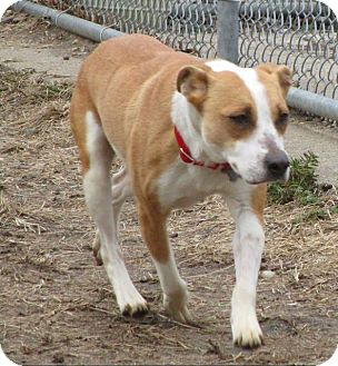Terrier (Unknown Type, Small) Dog for adoption in Freeport, New York - Sunshine