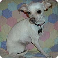 Adopt A Pet :: Princess Buttercup - Flossmoor, IL