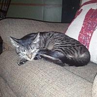 Adopt A Pet :: Teensie - Ocala, FL