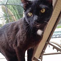 Adopt A Pet :: Spot - Orlando-Kissimmee, FL