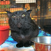 Adopt A Pet :: Nightfall - Rochester, MN