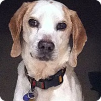 Adopt A Pet :: Camden Hughes - Waldorf, MD