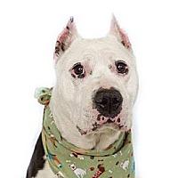 Adopt A Pet :: Thad - Orlando, FL