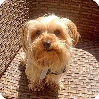 Adopt A Pet :: Astro - Morristown, NJ
